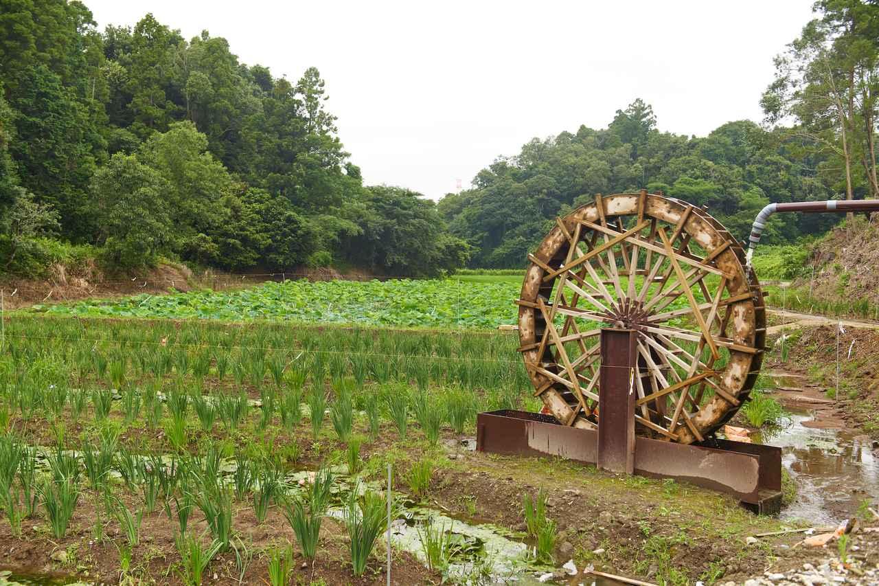 画像1: 「土」と「微生物農法」にこだわる運営元の「秀じい農場」
