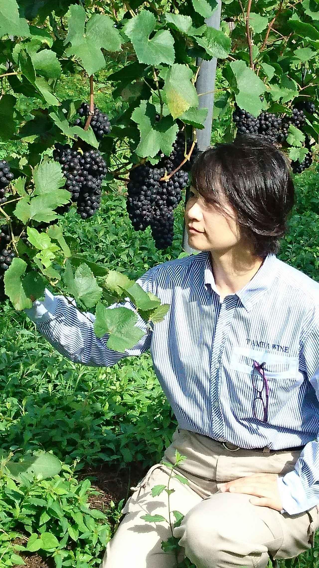 画像: 「丹波ワイン」醸造責任者 内貴麻里さん