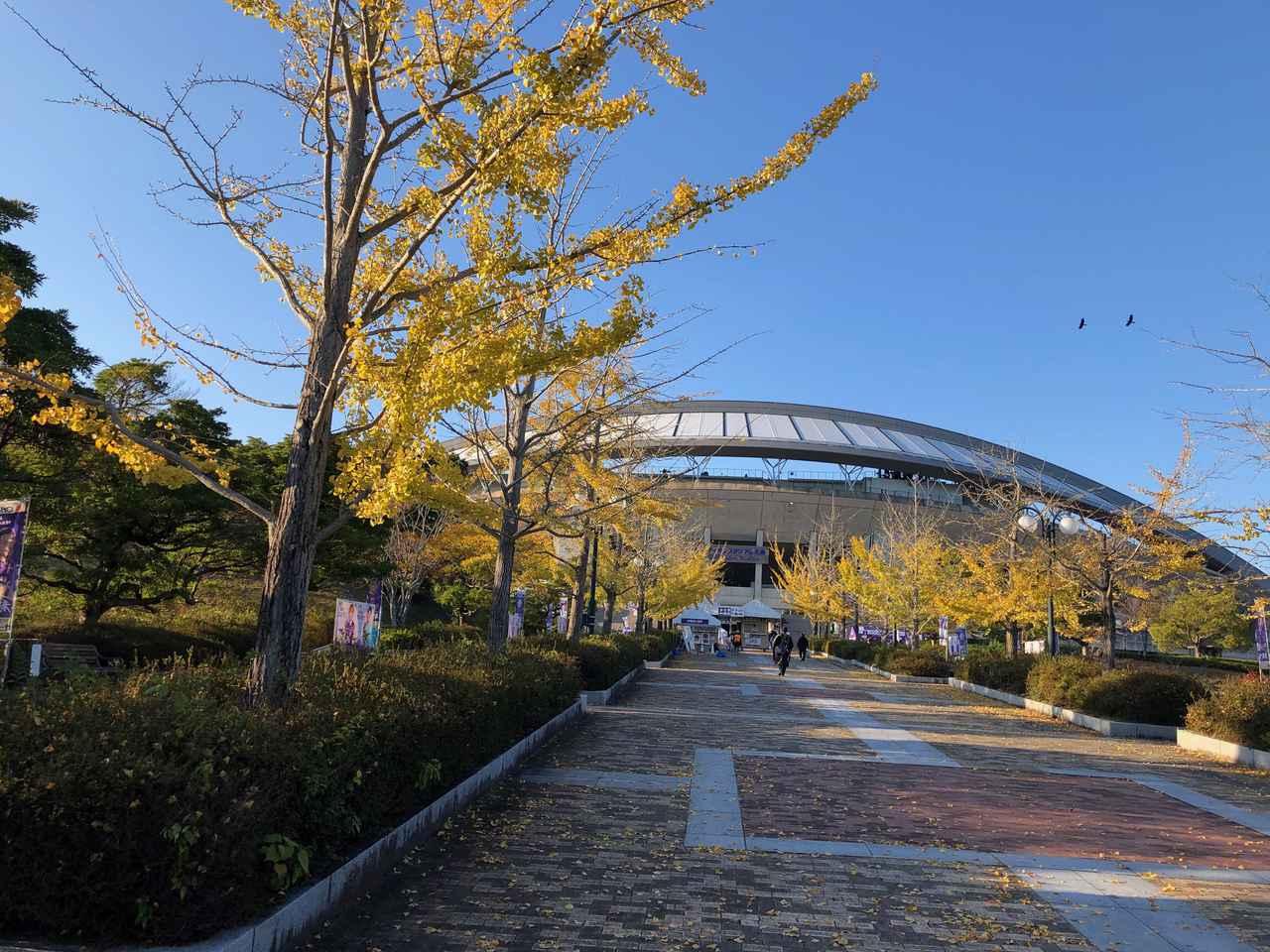 Images : 1番目の画像 - エディオンスタジアム広島の周辺では、いちょうの鮮やかな黄色が。落ち葉を片付けていたスタッフが、サンチェの顔を作って来場者をもてなした(写真◎石倉利英) - サッカーマガジンWEB