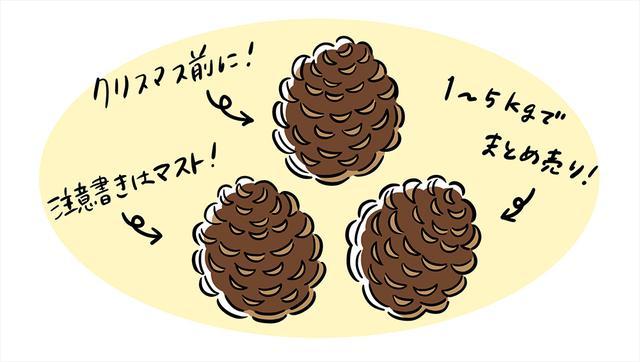 画像: 【アイテム①】松ぼっくり(出品価格:〜1,000円)