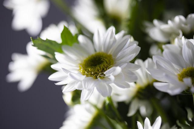 画像: 画像:iStock.com/Yuuji