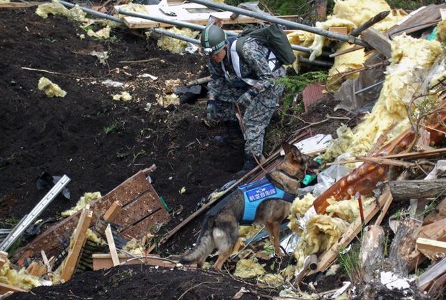 画像3: 空自初の国際救助犬、基地に眠る|空自百里基地
