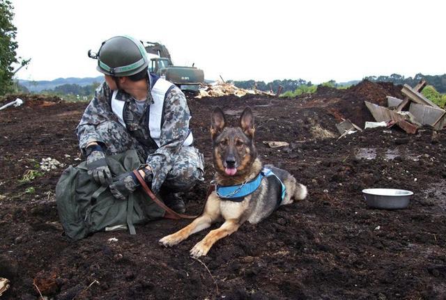 画像2: 空自初の国際救助犬、基地に眠る|空自百里基地