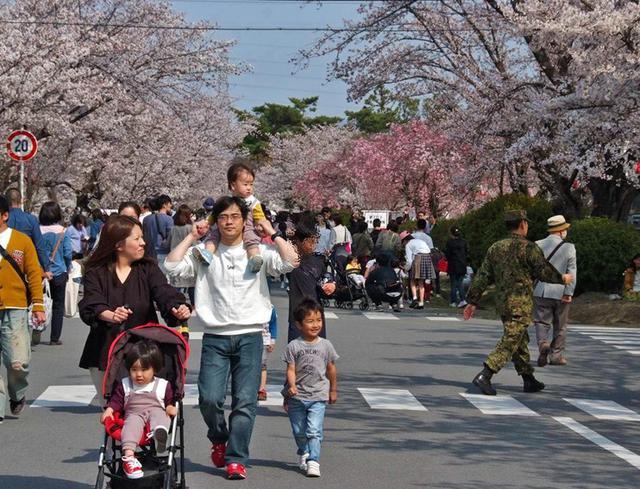 画像1: 桜並木 2.5万人で賑わう|桂駐屯地
