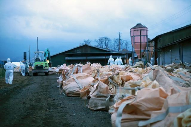 画像2: 長野県 豚コレラに災派|松本駐屯地