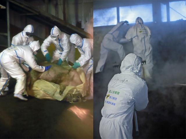 画像3: 長野県 豚コレラに災派|松本駐屯地