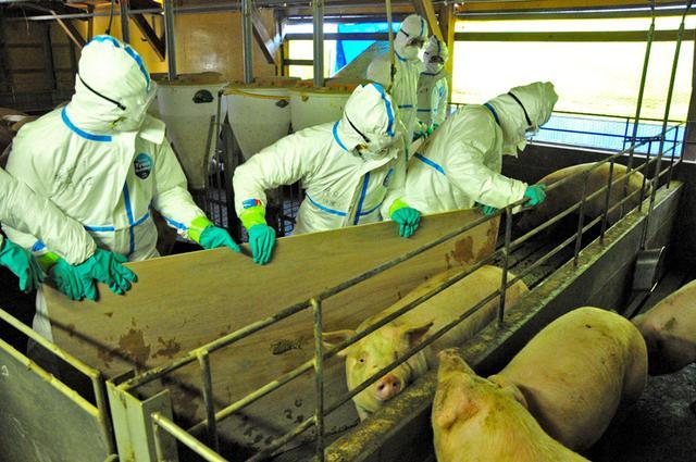 画像: 自衛隊初 豚コレラで災派|陸自10師団