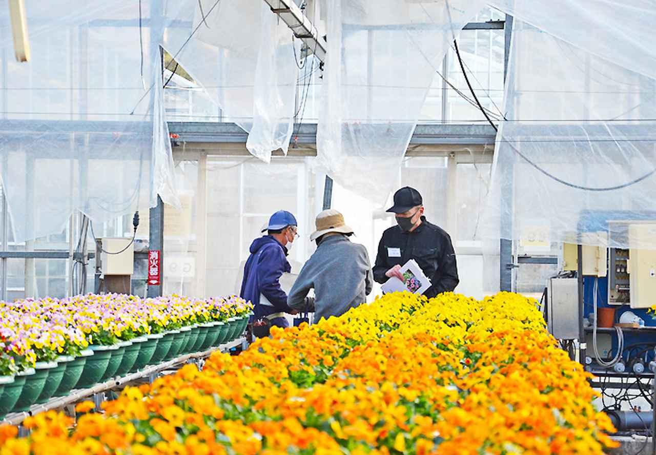 画像4: 就農インターンシップ 定年退職予定者が職業体験|山口地本