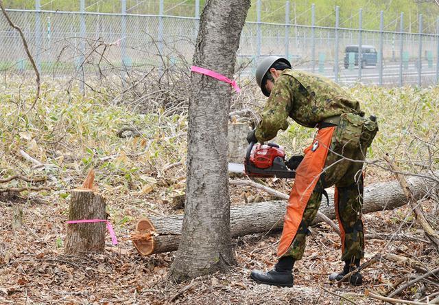 画像: チェーンソーでの支障木伐採