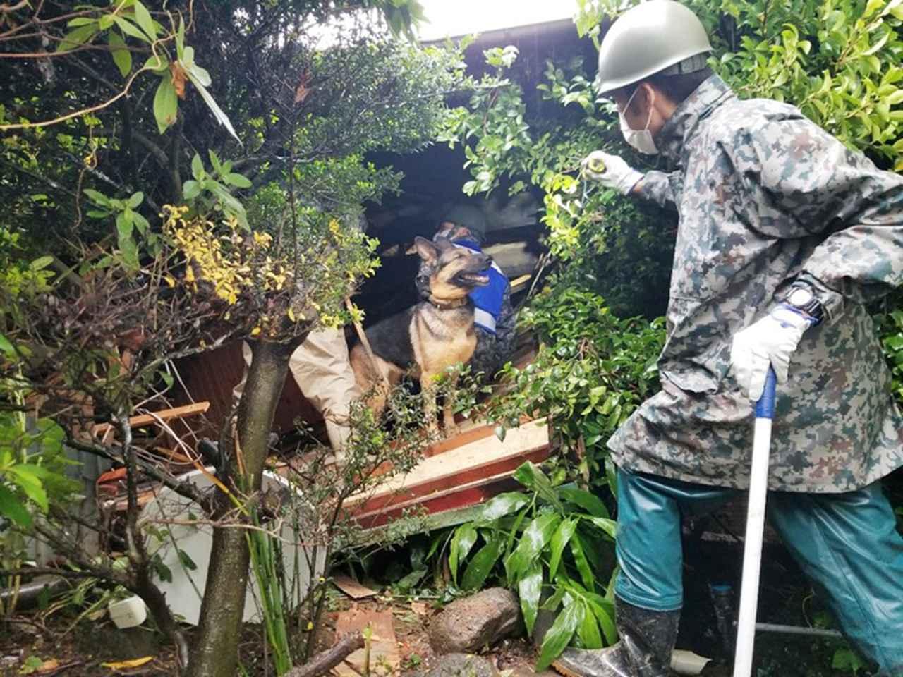 画像: 空自災害救助犬の活動(提供:統合幕僚監部)