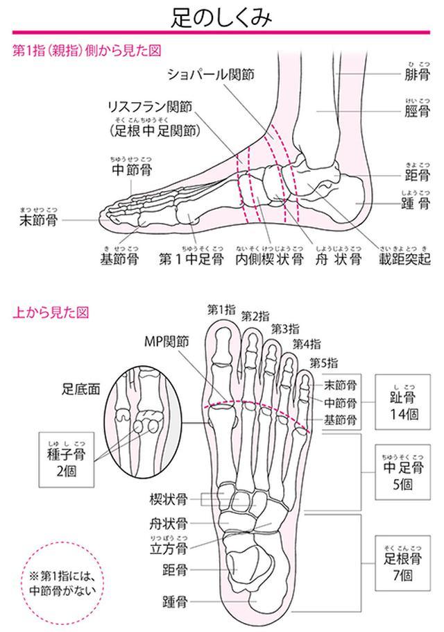 画像: 全身の約4分の1の骨が足に集中