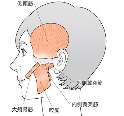 画像: 耳をひっぱると顎関節周りの筋肉・筋膜がゆるむ