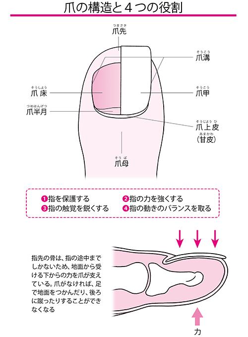 画像: 足の指の爪の役割とは?