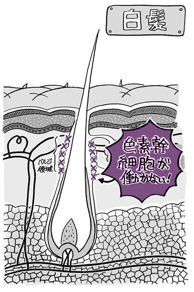 画像2: 【首を温める】頭皮の血流が促進され白髪の予防・改善につながると研究者も期待