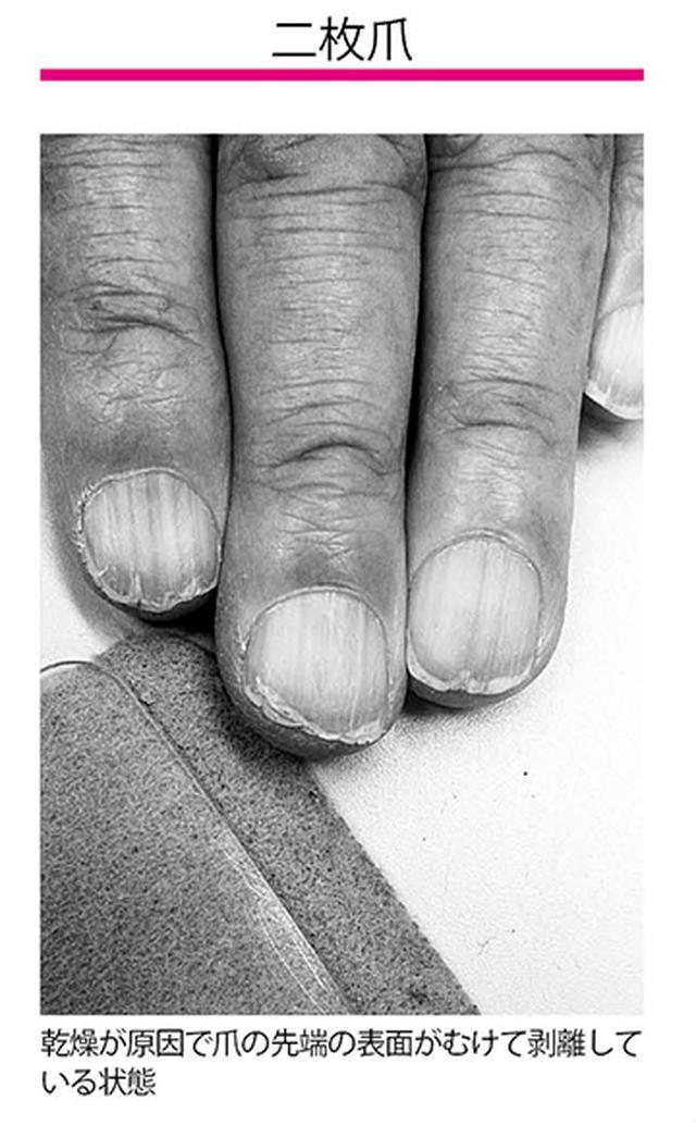 画像1: 二枚爪