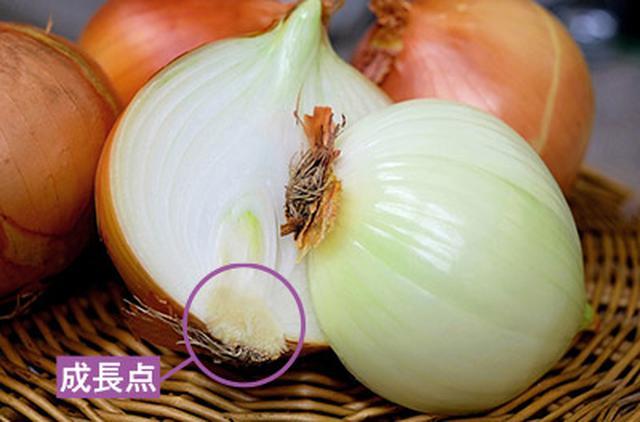 画像: タマネギは栄養ロスを招きやすい野菜