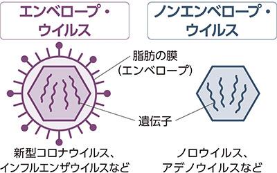 画像: 新型コロナは脂肪の膜で身を守っている!