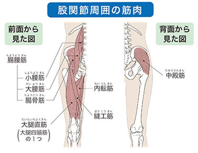 画像: 動かしやすくなって股関節が安定する