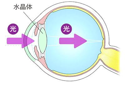 画像: 正常な眼球
