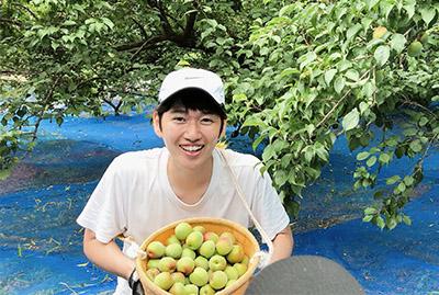 画像: 梅を収穫中の山本さん