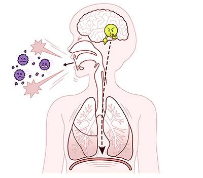 画像: 咳中枢が体に指令を出して、セキが出る。