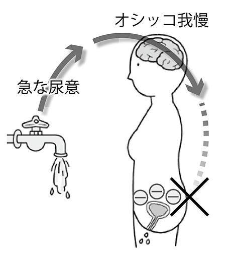 画像: 加齢などにより、排尿を我慢する脳からの信号をうまく送れなくなる