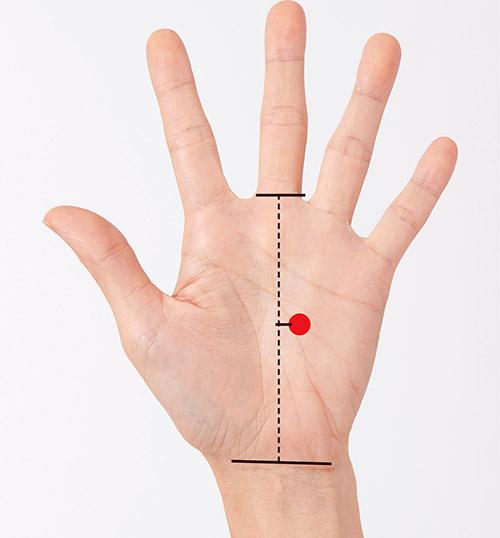 画像: 腎臓のポイントの位置。