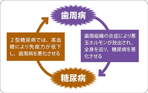 画像: 歯周病と糖尿病の悪循環