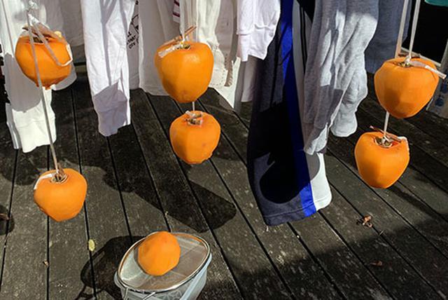画像: 洗濯物と一緒に干される柿たち。