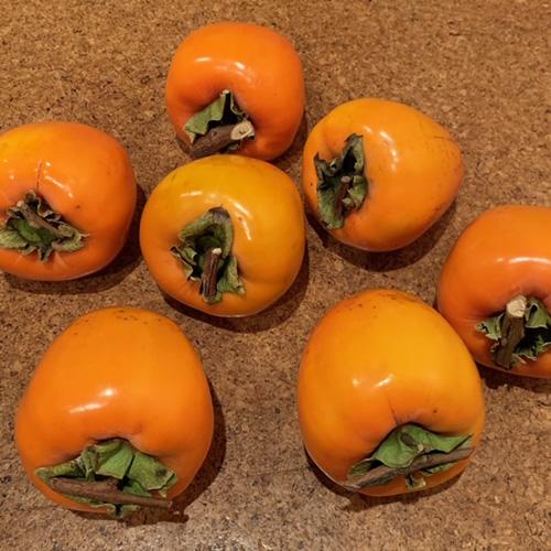 画像: 干し柿用の柿。ヒモを結ぶための枝がT字に残されています。