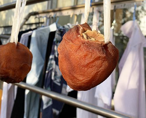 画像: ゴム通しを使って、実にひもを通した「落下柿」。見た目はすっかり干し柿です。