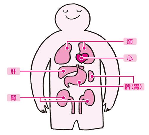画像: 五臓と不調について