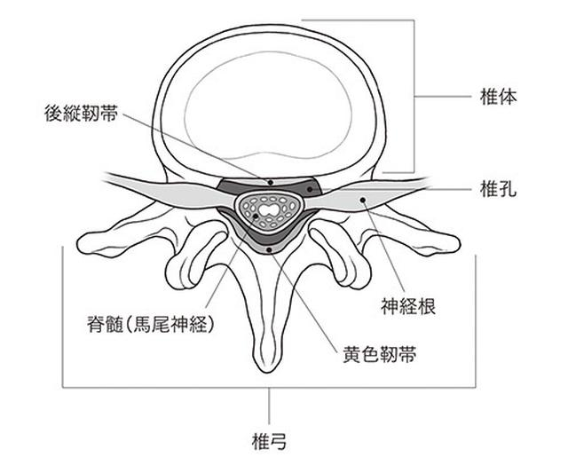 画像: 椎骨の構造