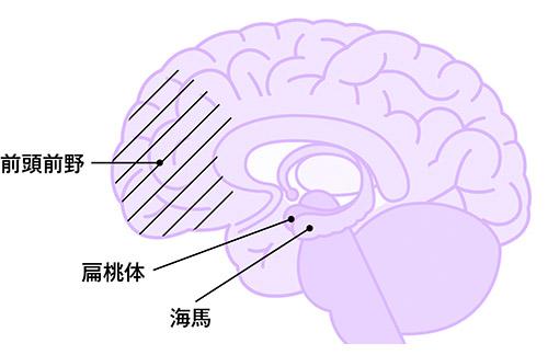 画像: 脳の深くにある扁桃体が出す「危機警報」が怒りの正体。