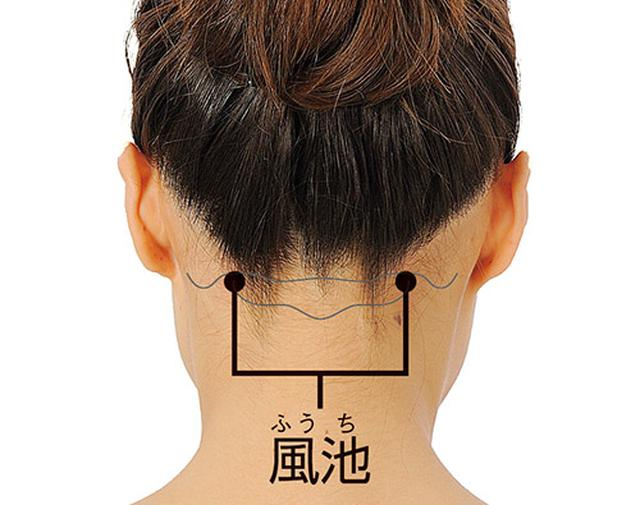 画像: 後頭部と首の境めで左右にある、少しくぼんだところ。