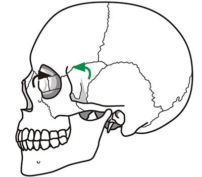 画像2: 【目の血流をよくする】眼球への圧迫を軽減し毛細血管の血行を改善する「頭蓋骨押し」のやり方