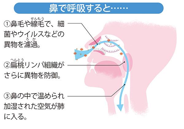 画像: 鼻呼吸は感染を二重に防いでくれる