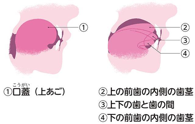 画像2: 【口呼吸チェックリスト】イビキや歯ぎしり、唇の乾燥も口呼吸のサイン 舌の位置も確認しよう