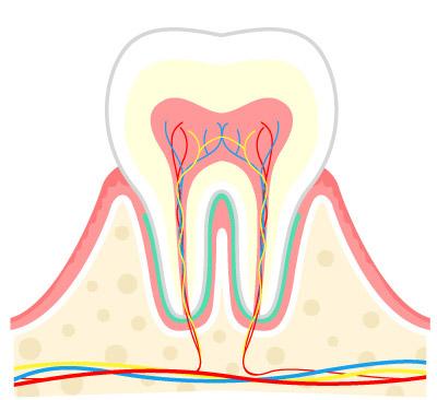 画像1: 【歯周病の予防】プラーク(歯垢)をしっかり落とす歯ブラシの選び方と歯磨き法を専門医が解説