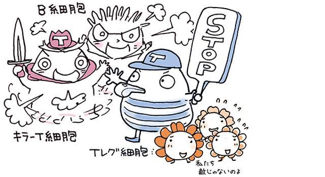画像: 免疫の暴走を止めるブレーキ役のTレグ細胞を増やすとアレルギーや自己免疫疾患が起こりにくくなる。