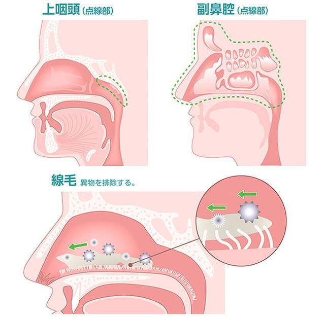 画像: 新型コロナの感染や重症化を防ぐセルフケア