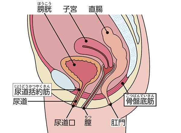 画像: 男女を問わず尿トラブルの解消に有効