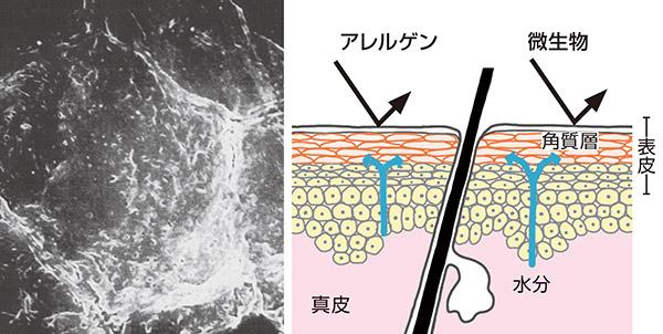 画像: うるおいのある肌