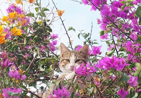 画像: 花に囲まれて優しい表情。