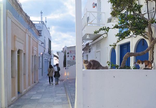 画像: 街の風景に溶け込んでいる猫たち。