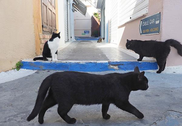 画像: 小道を陣取る猫たち。