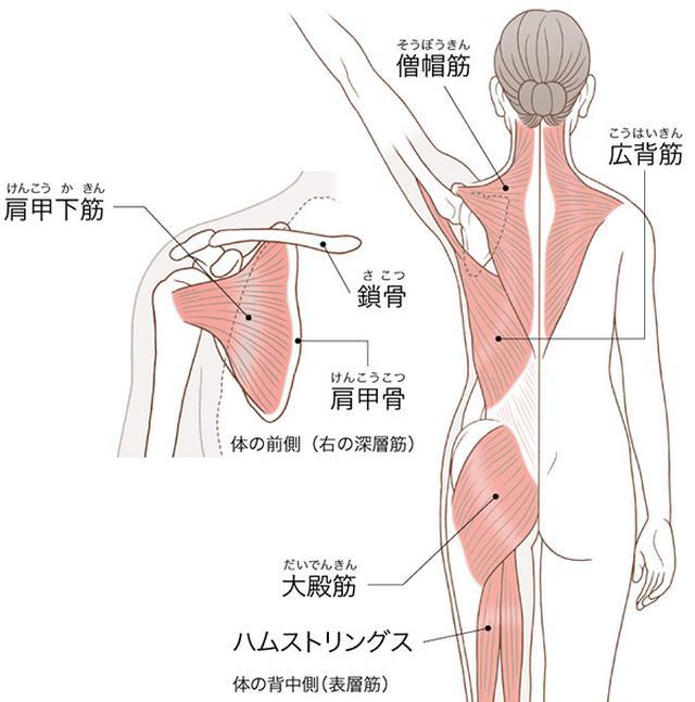 画像: 肩周りの筋肉を動かすと下半身まで刺激が伝わる