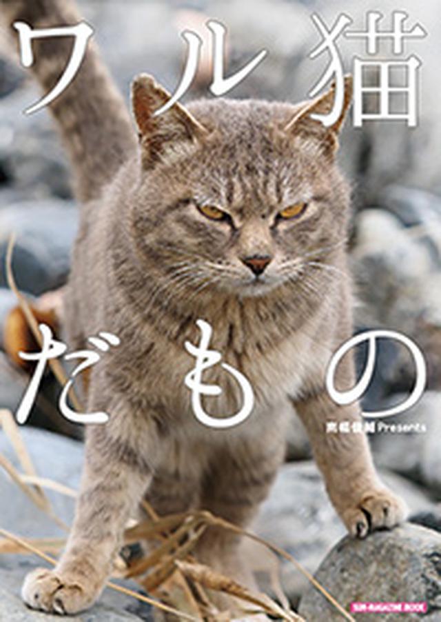 画像: 『ワル猫だもの』南幅俊輔著(マガジンマガジン)¥815(税込) www.amazon.co.jp