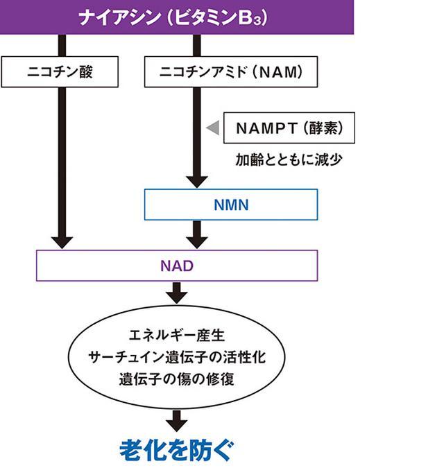 画像: NADはビタミンB3から作られる