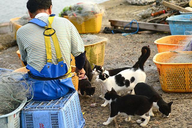 画像: 白黒猫たちが集まりお魚をおねだり。